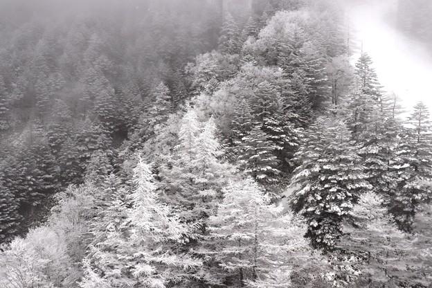 写真: 北八ヶ岳ロープウェー 雪景色