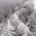 ????: 北八ヶ岳ロープウェー 雪景色