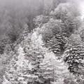 北八ヶ岳ロープウェー 雪景色