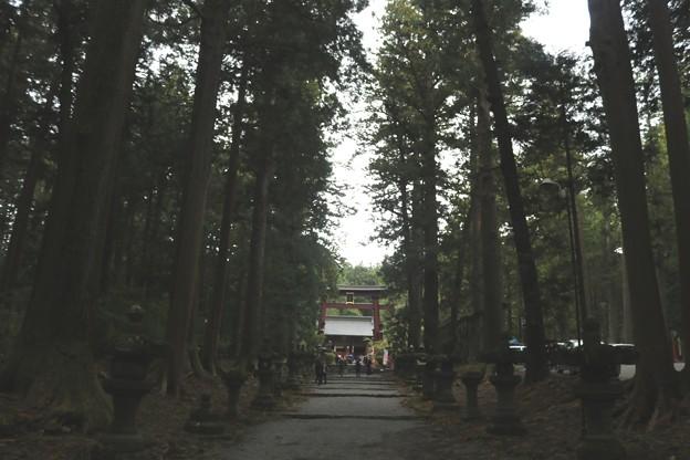 Photos: 北口本宮冨士浅間神社 参道