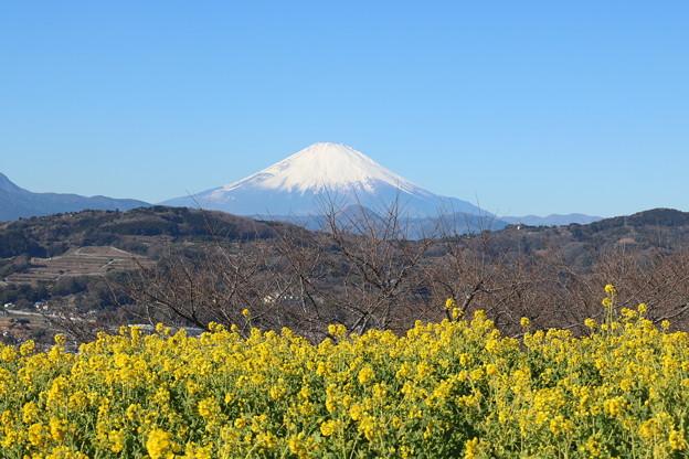 2018吾妻山公園