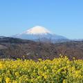Photos: 2018吾妻山公園
