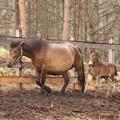 Photos: 木曽馬の里