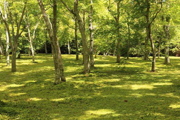 木漏れ日の庭園02