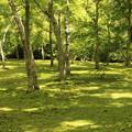 Photos: 木漏れ日の庭園02
