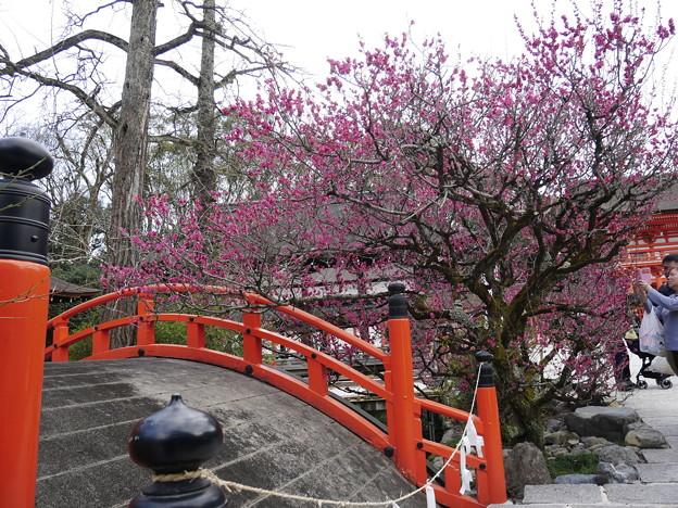 輪橋と光琳の梅