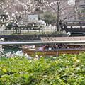 十石舟と桜