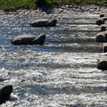 写真: 飛び石