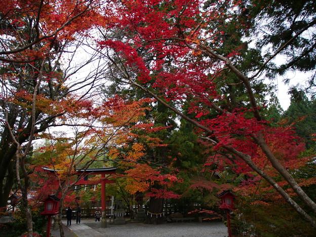 紅葉2018 鍬山神社 02