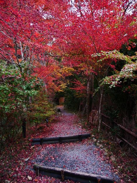 紅葉2018 鍬山神社 06