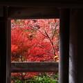 紅葉2018 鍬山神社 10