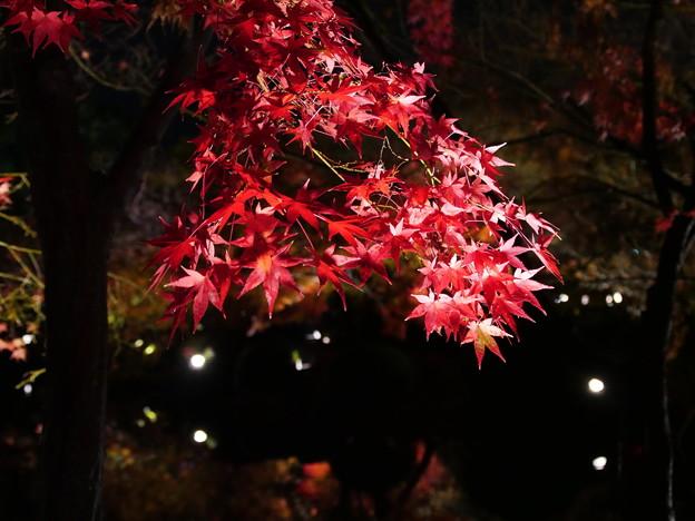 煌めく紅葉