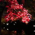 写真: 煌めく紅葉