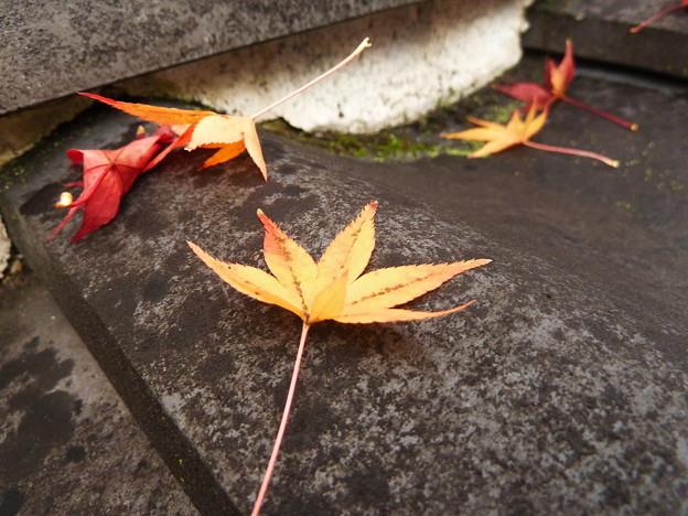 瓦屋根の紅葉