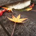 Photos: 瓦屋根の紅葉