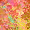 写真: 秋彩