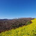 Photos: 富士山と菜の花8