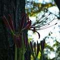 写真: もうそろそろ咲いているだろうと思い、公園へ行ってきた時の写真です