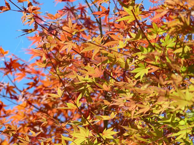 小さい秋、見~つけた(2)