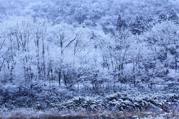 白銀の森を彷徨いて