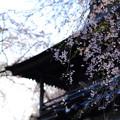 写真: 円正寺にて