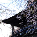 Photos: 円正寺にて