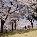 Photos: お花見の親子
