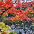写真: 石庭を俯瞰する