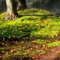 写真: 苔の絨毯