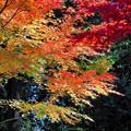 赤城見公園の紅葉1