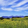 菜の花畑と赤城山