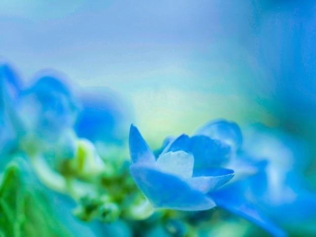 Photos: ブルーの世界