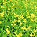 Photos: 苔の花