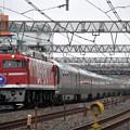Photos: EF81-95 カシオペア 東北本線 南浦和電車区付近