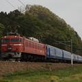 Photos: EF81-107 寝台特急 日本海 北陸本線 王子保~南条