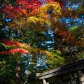 Photos: 赤 黄 緑