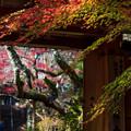 Photos: 神蔵寺