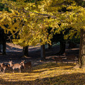 写真: 奈良公園