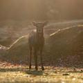 写真: 朝日をを浴びて