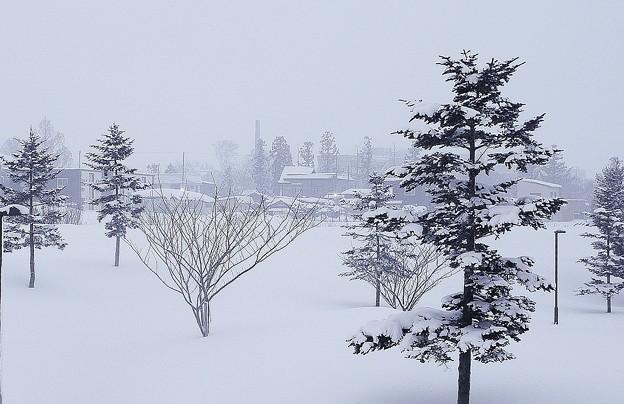 雪景色の公園