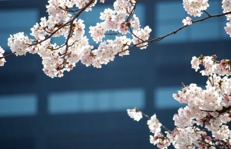 春に、ありがとう^^