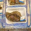 写真: 法螺貝2