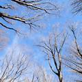 雑木林の冬空