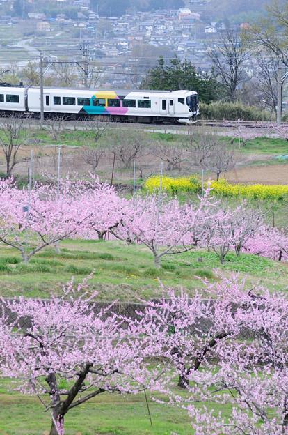 新府桃源郷を行く中央線列車