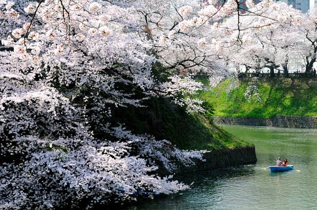桜とボート桜