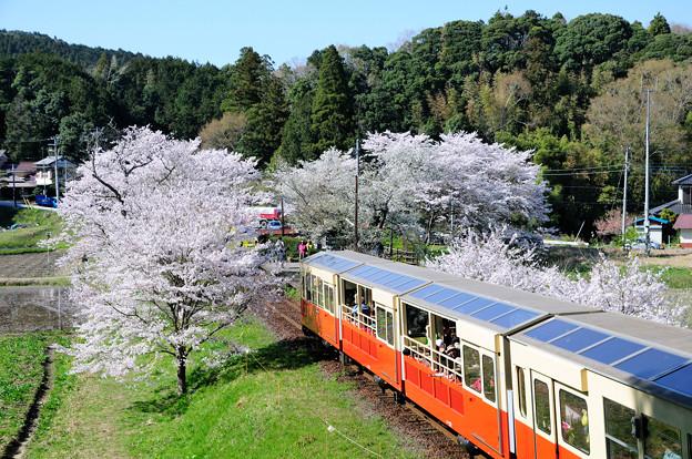 里山トロッコ列車到着