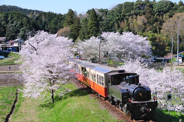 桜と里山トロッコ列車