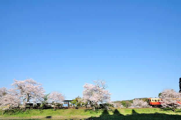 飯給駅と桜とキハ