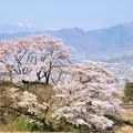 甚六桜と211系電車
