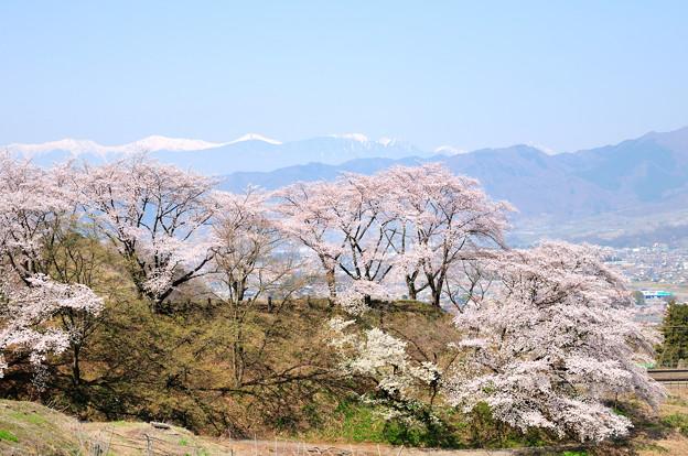 勝沼甚六桜と南アルプス